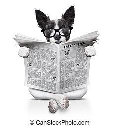 dog reading newspaper - terrier dog reading newspaper...