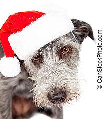 Terrier Dog Wearing Santa Hat In Snow