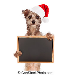 Terrier Dog With Santa Hat and Sign
