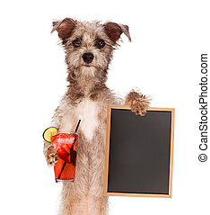 Terrier Holding Drink and Sign - Terrier dog against a white...