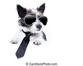 terrier, hund