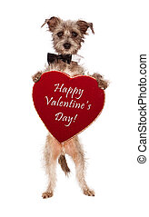 terrier, kutya, birtok, valentines nap, szív