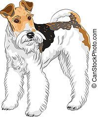 terrier, perro, casta, vector, posición, bosquejo, zorro, alambre