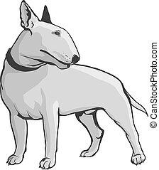 terrier, toro