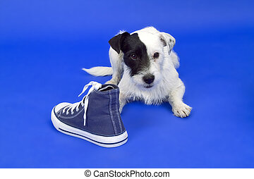 Terrier with shoe