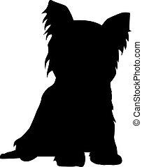 terrier, yorkshire, silueta, sentado