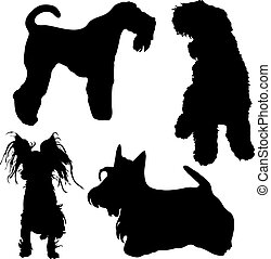 Terriers: kerry blue, Russian black, Scottish and Moscow...