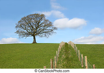 Oak tree on a horizon in early spring with a double wooden post and wire fence line dividing a field in the foreground. Set against a blue sky with alto cumulus clouds.