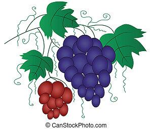 tervezés, szőlő, elágazik, elem