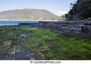Tessellated Pavement in Pirates Bay. - View of Tessellated...