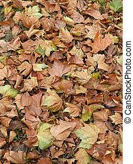 tessiture, colpo, foglie, sfondi, morto, ideale