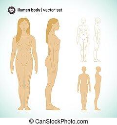 test, állhatatos, női