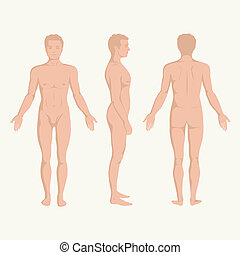 test, anatómia, ember