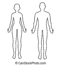 test, hím, áttekintés, női