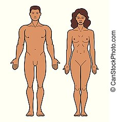 test, hím, női