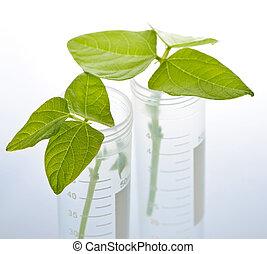 test, plant, buizen, gm, seedlings