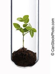 test, plant, groene, buis
