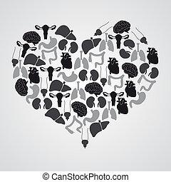test, szív, eps10, alakít, belső, emberi, hangerők