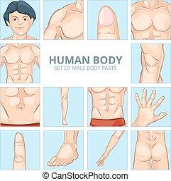 test, vektor, állhatatos, ikonok, karikatúra, alkatrészek, hím, style.