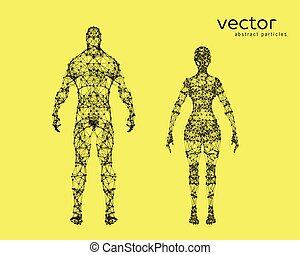 test, vektor, hím, női, ábra