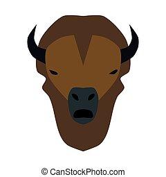 testa, bufalo