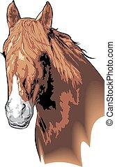 testa, cavallo marrone