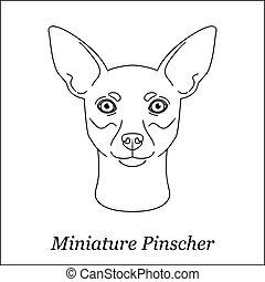testa, contorno, miniatura, razza, linea, isolato, cane, fondo., nero, portrait., bianco, pinscher, cartone animato