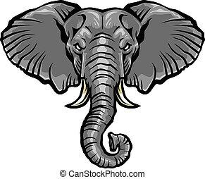 testa elefante