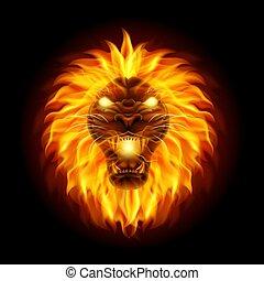 testa, fuoco, leone, fondo, isolato, nero