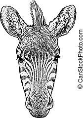 testa, illustrazione, disegno, incisione, vettore, inchiostro, zebra, art linea