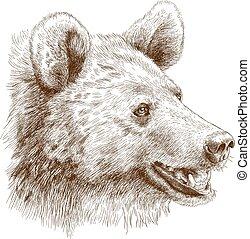 testa, illustrazione, orso, incisione