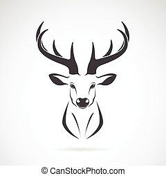 testa, immagine, cervo, vettore, disegno, fondo, bianco