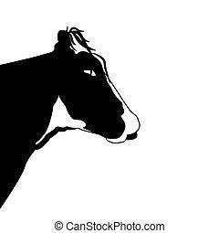 testa, mucca, sfondo nero, ritratto, bianco