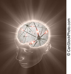 testa, neurons