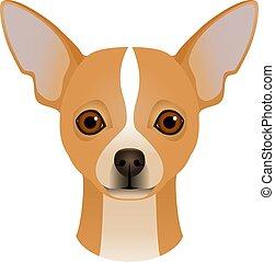 testa piana, chihuahua, colorito, cane, colorare, razza, isolato, faccia, fondo., portrait., bianco, cartone animato