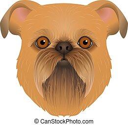testa piana, colorito, cane, colorare, razza, isolato, faccia, fondo., griffon, portrait., bianco, bruxelles, cartone animato, belga