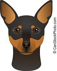 testa piana, colorito, miniatura, colorare, razza, isolato, faccia, fondo., portrait., cane, bianco, pinscher, cartone animato