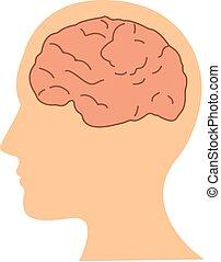 testa piana, illustrazione, cervello, vettore, disegno, umano, icona