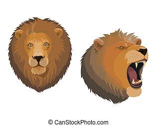 testa, ruggire, arrabbiato, leo, leone, faccia animale