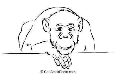 testa, scimmia, lei, zampa, triste, mettere