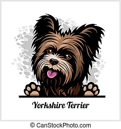 testa, terrier, razza, sfondo colore, yorkshire, cane bianco