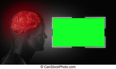 testa umana, accanto a, uno, verde, schermo