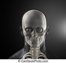 testa, umano, fronte, maschio, raggi x, vista