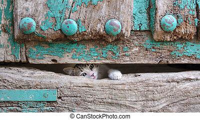 testa, vecchio, gamba, legno, gattino, attraverso, piccolo, porta, buco