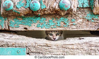 testa, vecchio, legno, gattino, attraverso, piccolo, porta, buco