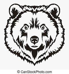 testa, vettore, cartone animato, orso