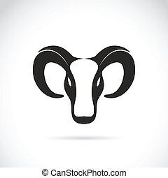 testa, vettore, immagine, goat