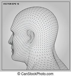 testa, wireframe, maschio, umano, 3d
