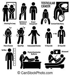 testes, testicular, testicles, câncer