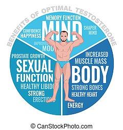 testosterona, beneficios, optimal